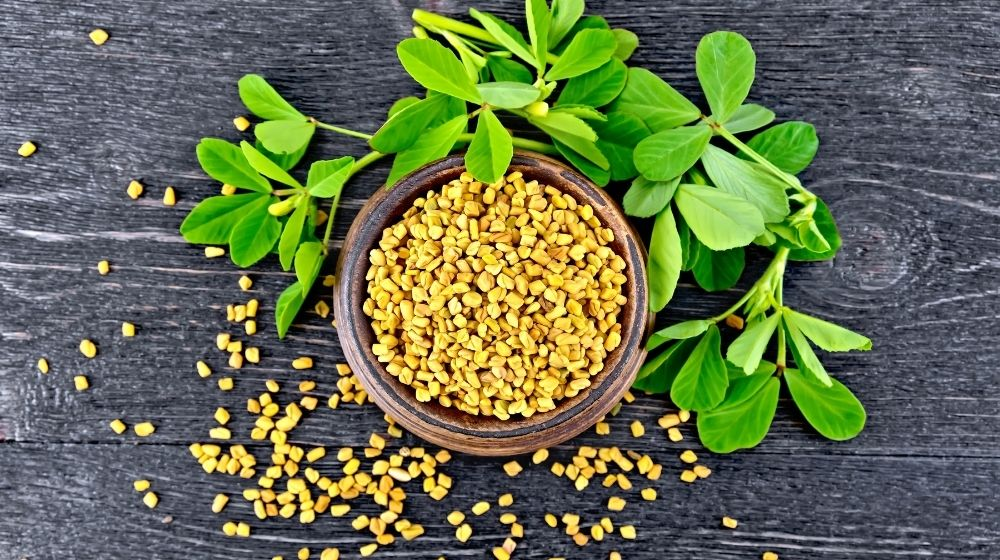 bowl of fenugreekss bean with leaf aside | Feature | Benefits of Fenugreek for Testosterone