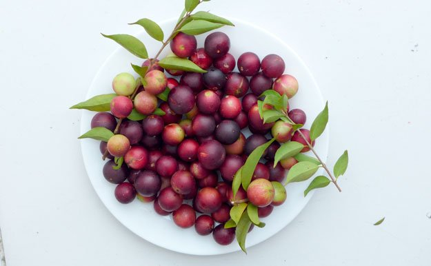 camu-camu-fruits-in-white-bowl   5 Foods to Increase Stamina