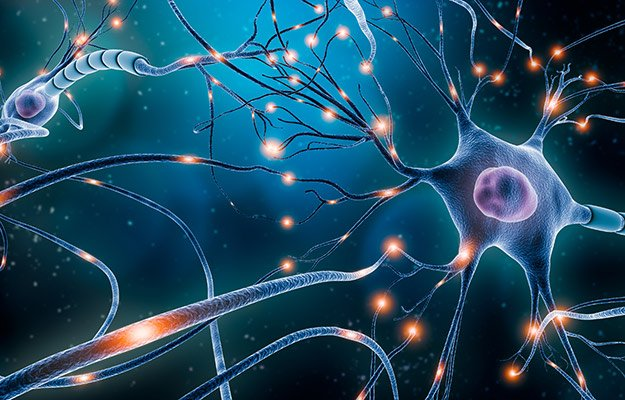 A brain nerve system | What Are Nootropics? 'Cognitive Enhancers' to Increase Mental Alertness