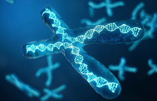 Telomeres, chromosome   How Can Telomeres Affect Aging?